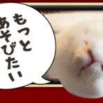 「猫だって筋トレ脳トレ?」天気が悪い日はてるてる坊主でストレス発散!