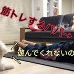 筋トレを邪魔する犬が可愛いすぎた【ヨガマット】【ビションフリーゼ】