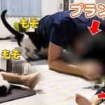 【筋トレ】リングフィットアドベンチャーをすると始まる猫の妨害