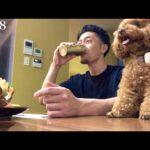 【日記】食事と筋トレとハンとシェフ#448