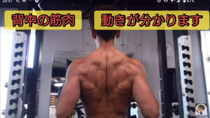懸垂で使う筋肉を見る!見て勉強  #筋トレ #減量 #ボディビル #プロテイン #マイプロテイン #減量 #三田市 #広背筋 #懸垂