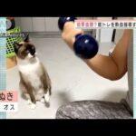 ネコが筋トレを熱血指導!? 2匹のトレーニャー(2021年9月29日)